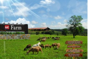 Johor UK Farm Kluang To/From Singapore